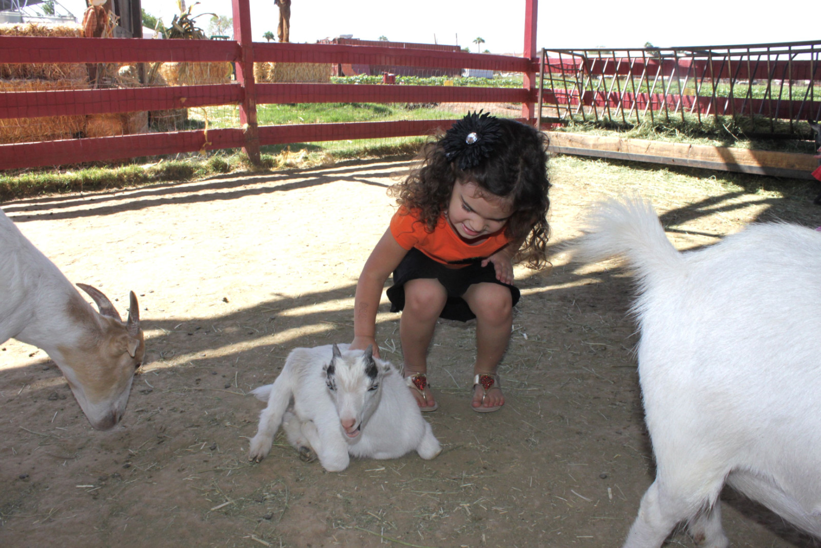 SOFIA WITH GOAT AGAIN.jpg